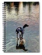 Pointer Dog Spiral Notebook