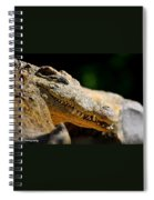 Pointy Teeth Spiral Notebook