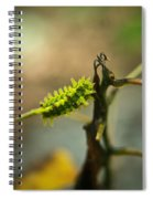 Poisonous Insect Larva Spiral Notebook