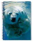 Polar Bear Contemplating Dinner Spiral Notebook