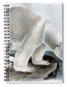 Polar Bear (ursus Maritimus) Spiral Notebook