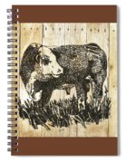 Polled Hereford Bull 11 Spiral Notebook