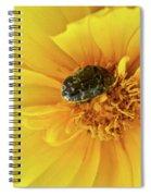 Pollen Feeding Beetle Spiral Notebook