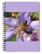Pollinating 4 Spiral Notebook