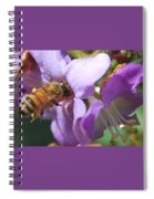 Pollinating 5 Spiral Notebook