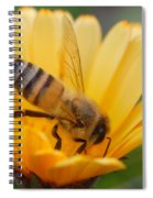 Pollination 2 Spiral Notebook