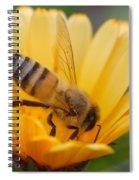 Pollination 2 Spiral Notebook