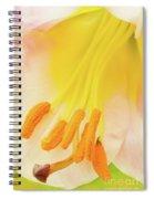 Pollinator's Heaven Spiral Notebook