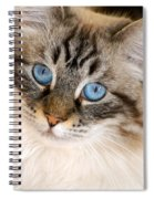 Polly Spiral Notebook