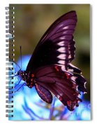 Polydamas Swallowtail Butterfly Spiral Notebook