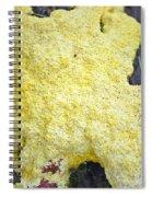 Polymyxa Slime Mold Spiral Notebook