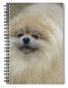 Pom Pom Smiling Spiral Notebook