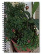 Pomegranate In The Pot Greece  Spiral Notebook