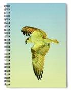 Ponce Osprey 4 Spiral Notebook
