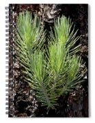 Ponderosa Pine 4 Spiral Notebook
