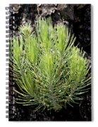 Ponderosa Pine 5 Spiral Notebook