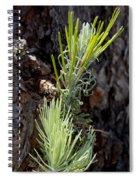 Ponderosa Pine 8 Spiral Notebook