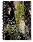 Ponderosa Pine 9 Spiral Notebook