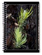 Ponderosa Pine Wide Spiral Notebook