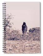 Poney Spiral Notebook