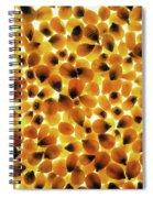 Popcorn Seeds Spiral Notebook