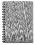 Poplars Beauty Trees Spiral Notebook