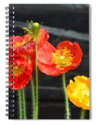 Poppies 17-01 Spiral Notebook