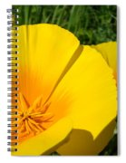 Poppies Art Poppy Flowers 4 Golden Orange California Poppies Spiral Notebook