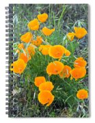 Poppies II Spiral Notebook