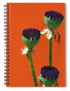 Poppies On Orange Spiral Notebook