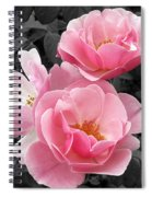 Popping Pink Roses Spiral Notebook