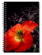 Poppy At Dusk Spiral Notebook