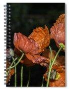 Poppy Drama Spiral Notebook