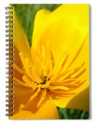 Poppy Flower Close Up Macro 20 Poppies Meadow Giclee Art Prints Baslee Troutman Spiral Notebook