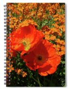 Poppy Glories Spiral Notebook
