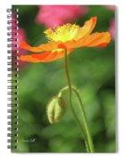 Poppy Glow Spiral Notebook