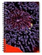 Poppy Inside Spiral Notebook