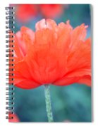 Poppy Profile Spiral Notebook