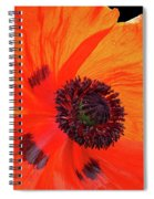 Poppy With Raindrops 2 Spiral Notebook