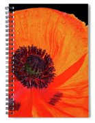 Poppy With Raindrops 3 Spiral Notebook