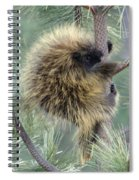 Porcupine Tree Spiral Notebook