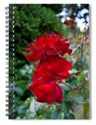 Portland Roses #6 Spiral Notebook