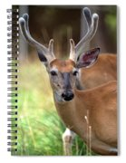 Portrait Of A Beautiful Buck  Spiral Notebook