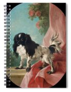 Portrait Of A Cavalier King Charles Spaniel Spiral Notebook