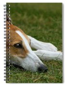 Portrait Of A Greyhound - Soulful Spiral Notebook