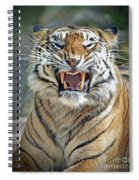 Portrait Of A Growling Tiger  Spiral Notebook