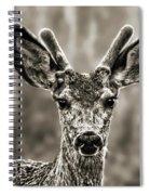 Portrait Of A Male Deer II Spiral Notebook