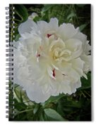 Portrait Of A Peony Spiral Notebook