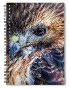 Portrait Of A Red-tailed Hawk Spiral Notebook