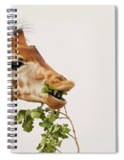 Portrait Of A Rothschild Giraffe IIi Spiral Notebook